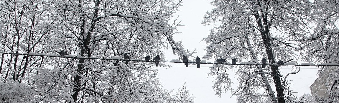 Birds sitting on a wire